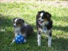 bailey-and-darcy-dec-08_400x300